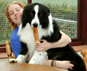 Dog Grooming Jobs Oxford